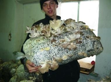 Выращиваем грибы на дому