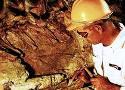 Использование геологических изысканий