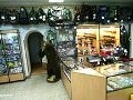 Нюансы работы магазина для охотников и рыболовов
