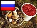Зарабатываем на грибах и ягодах